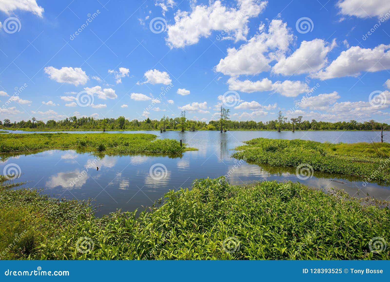 Lakes In Florida Wetlands