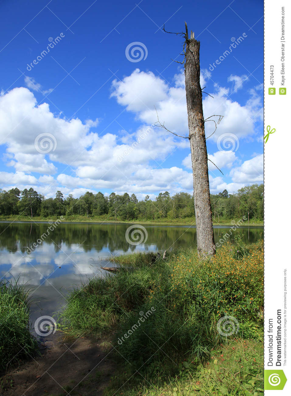 Lakes within Itasca State Park