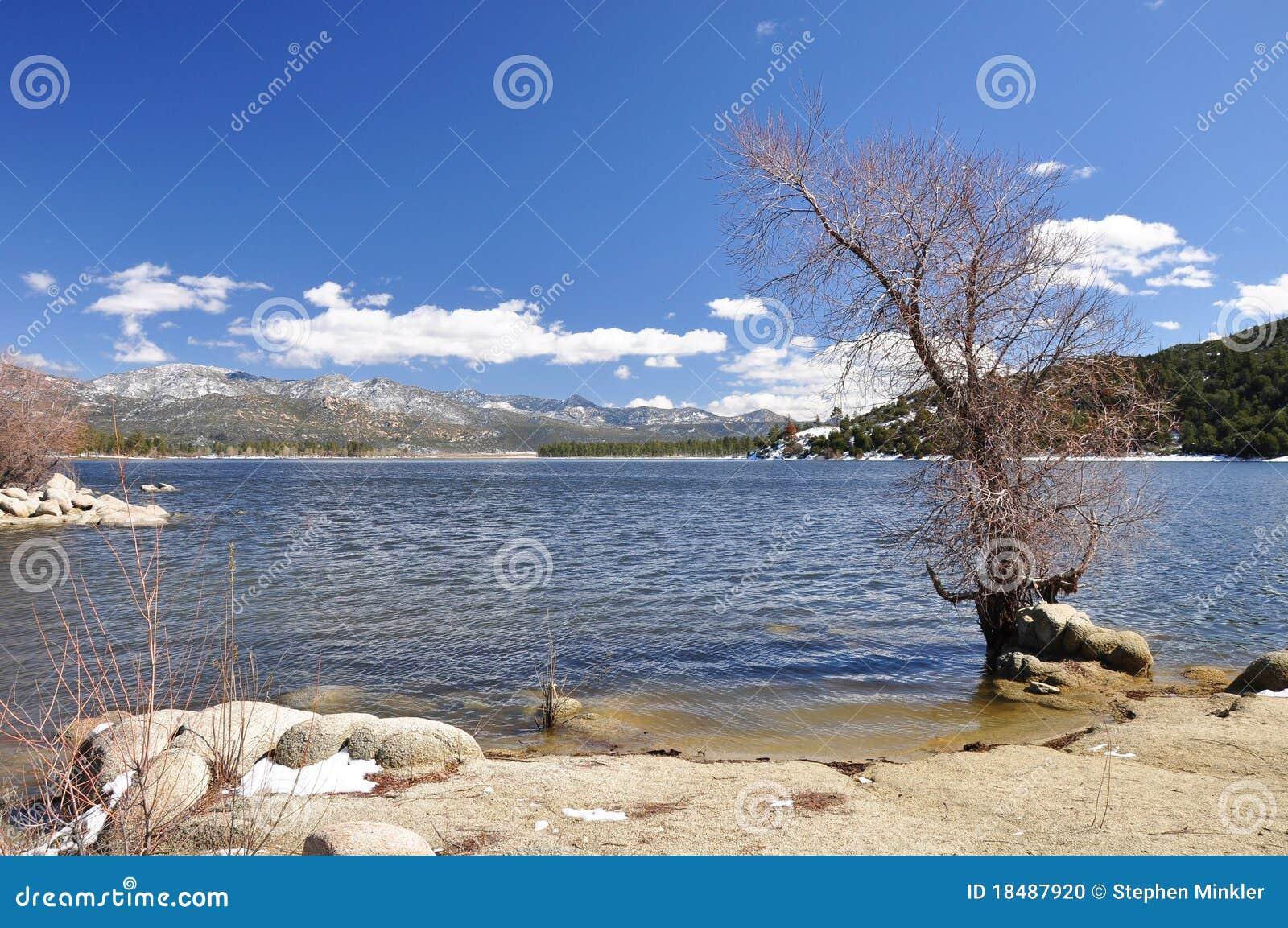 Lakeshore arbre stérile