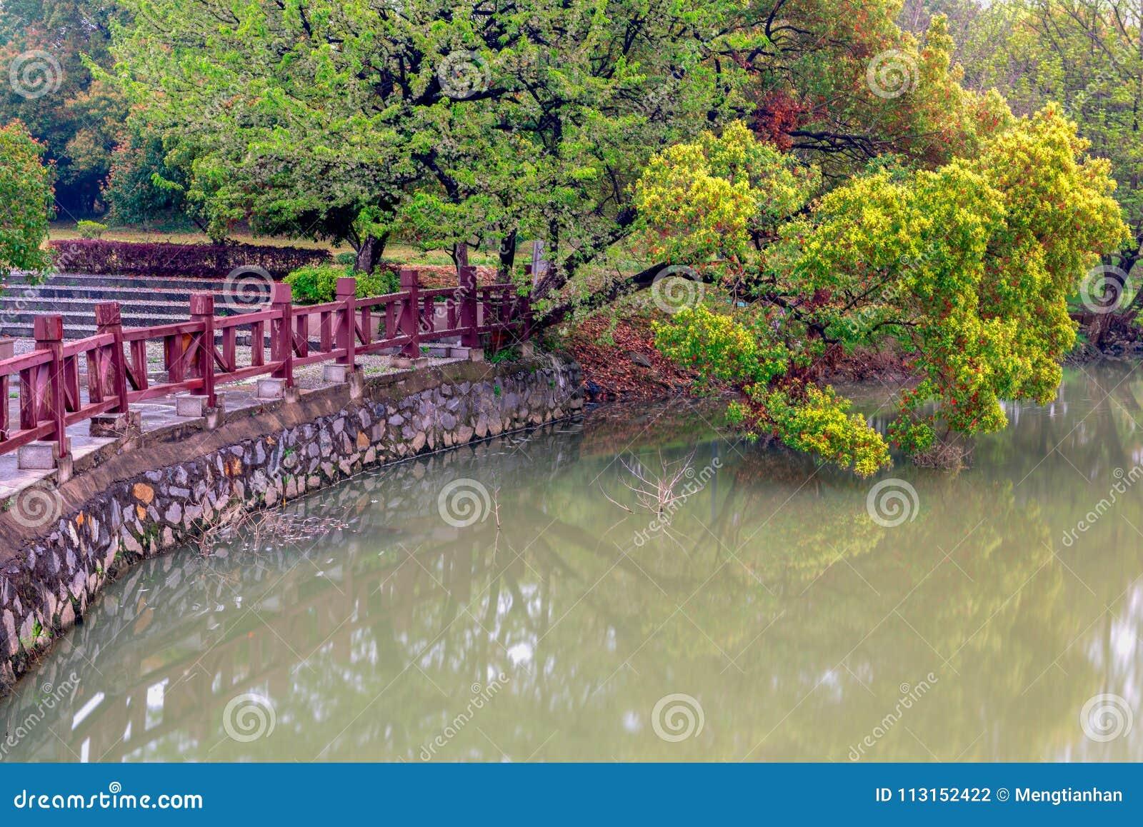 Lakeside arbre-Nan-Tchang Mei Lake Scenic Area