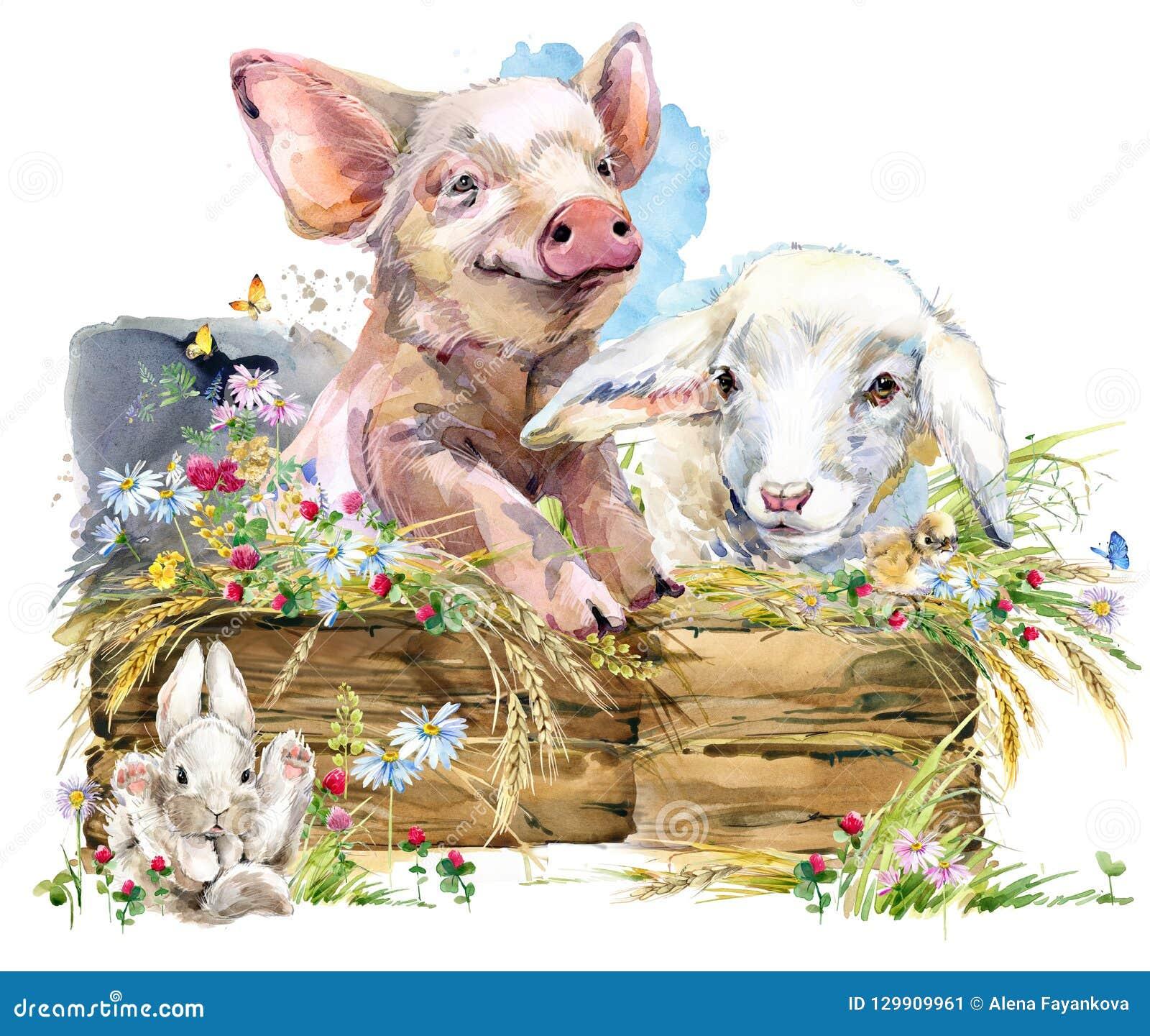 Lam Leuk varken Chiken Konijn de dierlijke inzameling van waterverflandbouwbedrijven