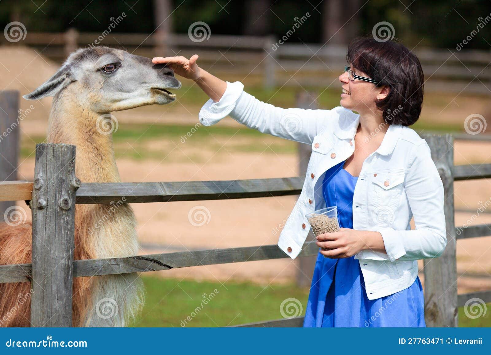 Lama alimentant de jeune femme attirante