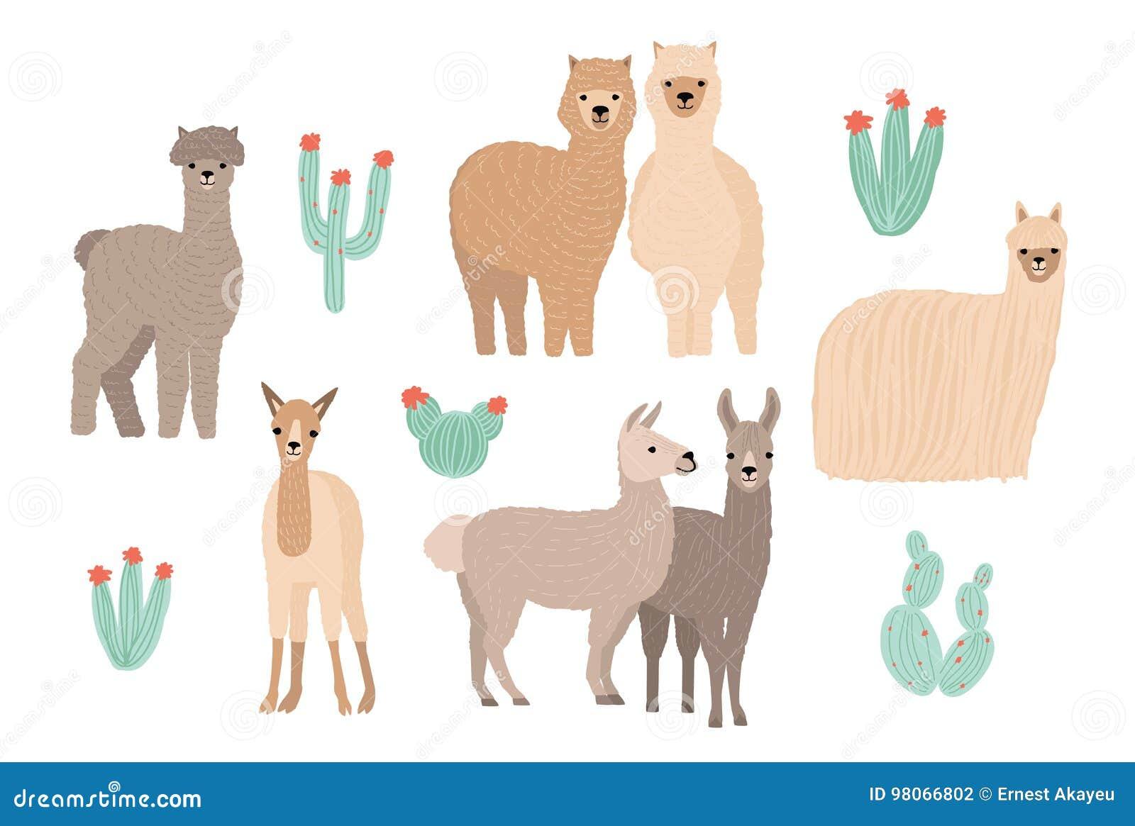 Lama, alpaca linda y cactus fijados Ejemplo colorido dibujado mano del vector de la historieta