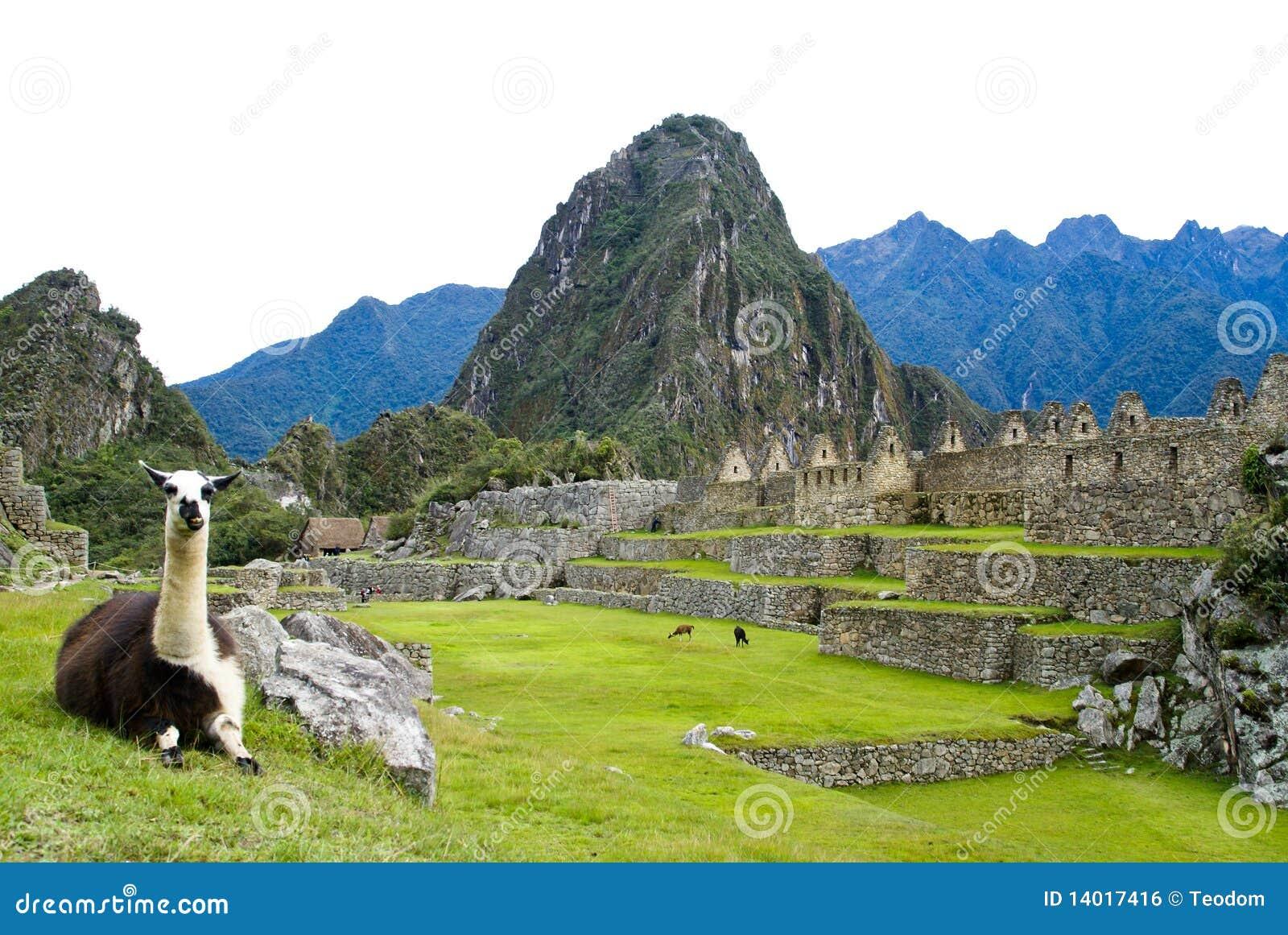 Lama em Machu Picchu, Peru