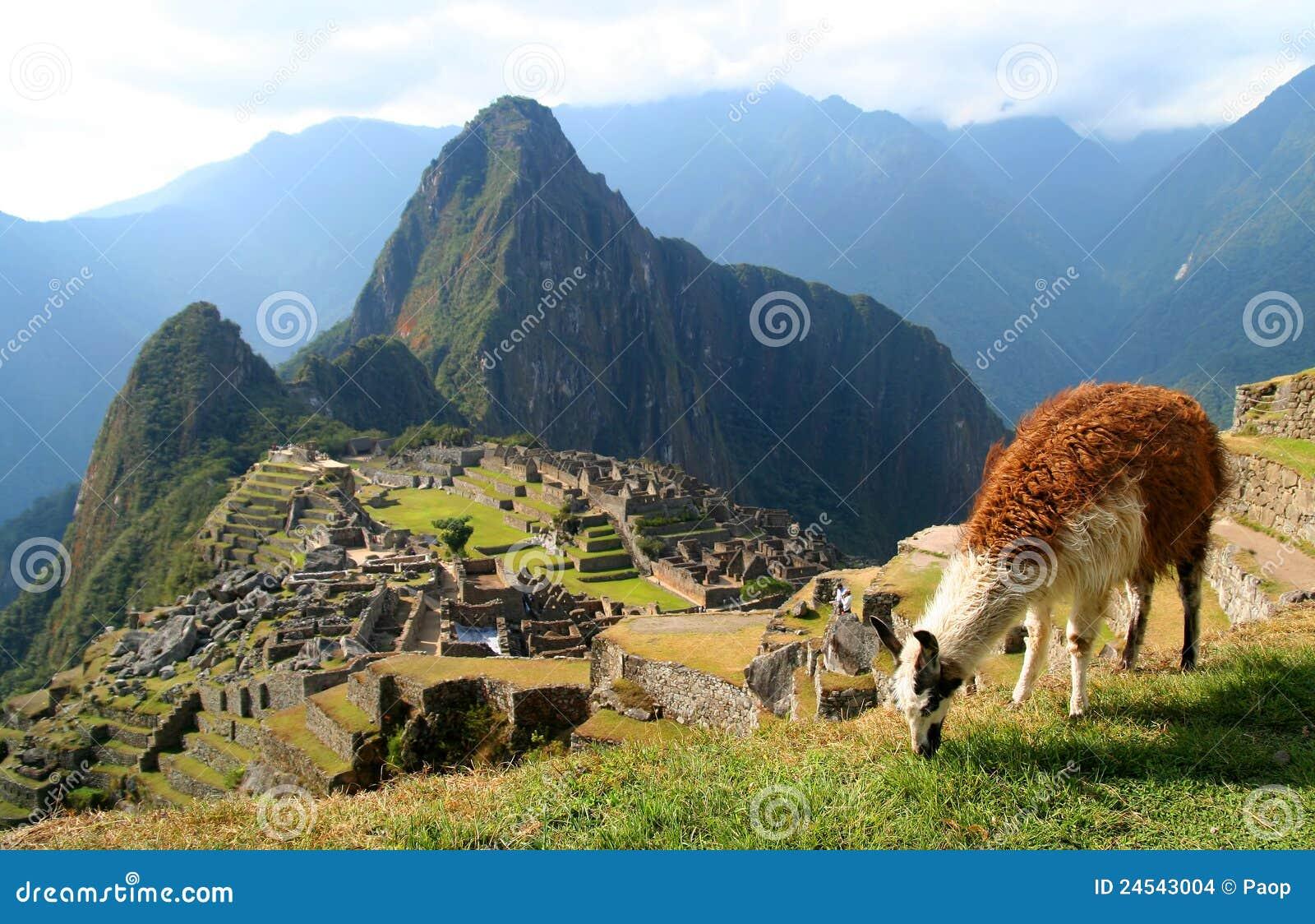 Lama And Machu Picchu