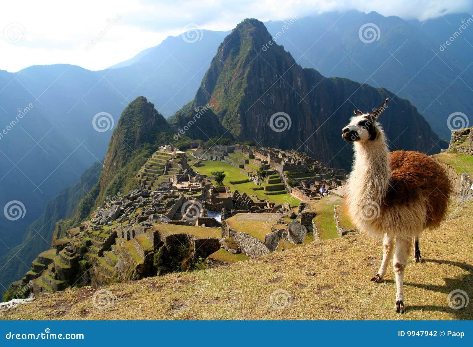 Lama y Machu Picchu