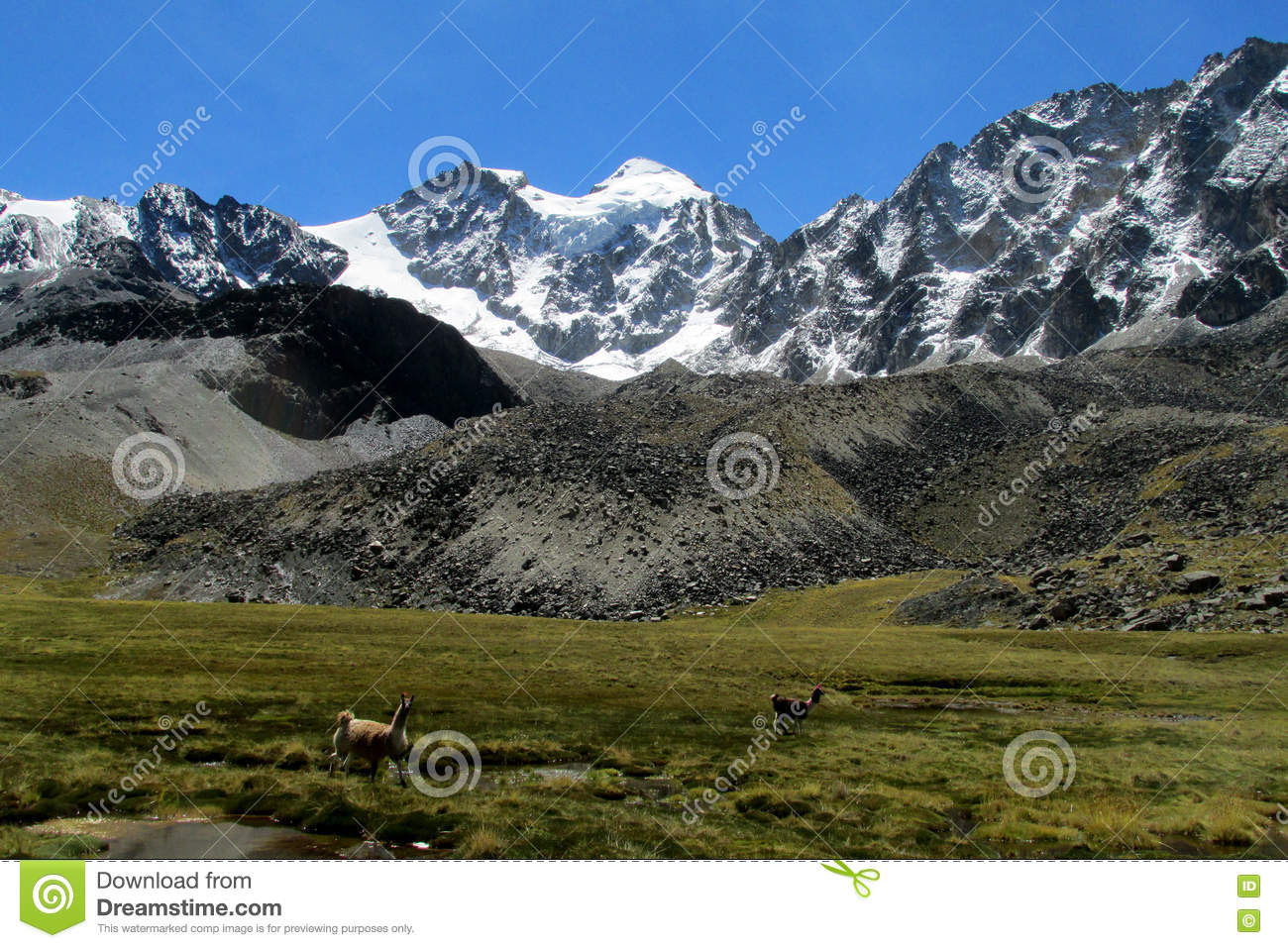 Download Lamas On Green Meadow In The Andes Stock Image - Image of lake, erosion: 78117313