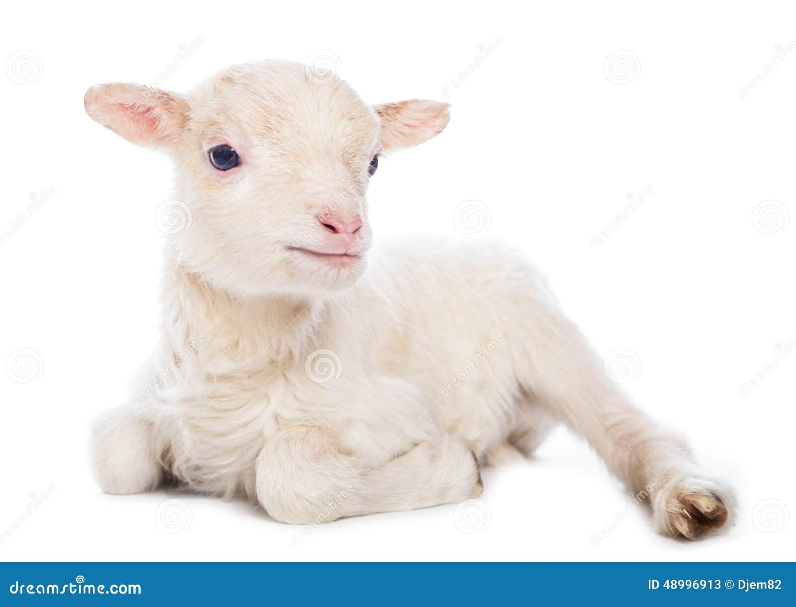 Lamb Web Design
