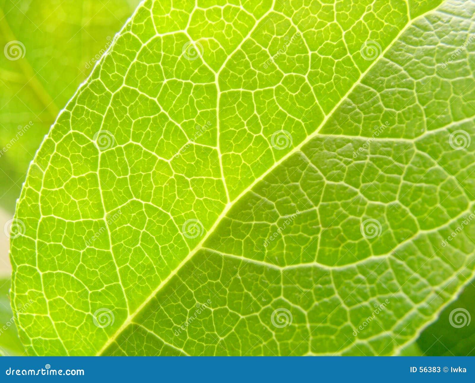 Download Lame image stock. Image du texture, support, arbre, détaillé - 56383