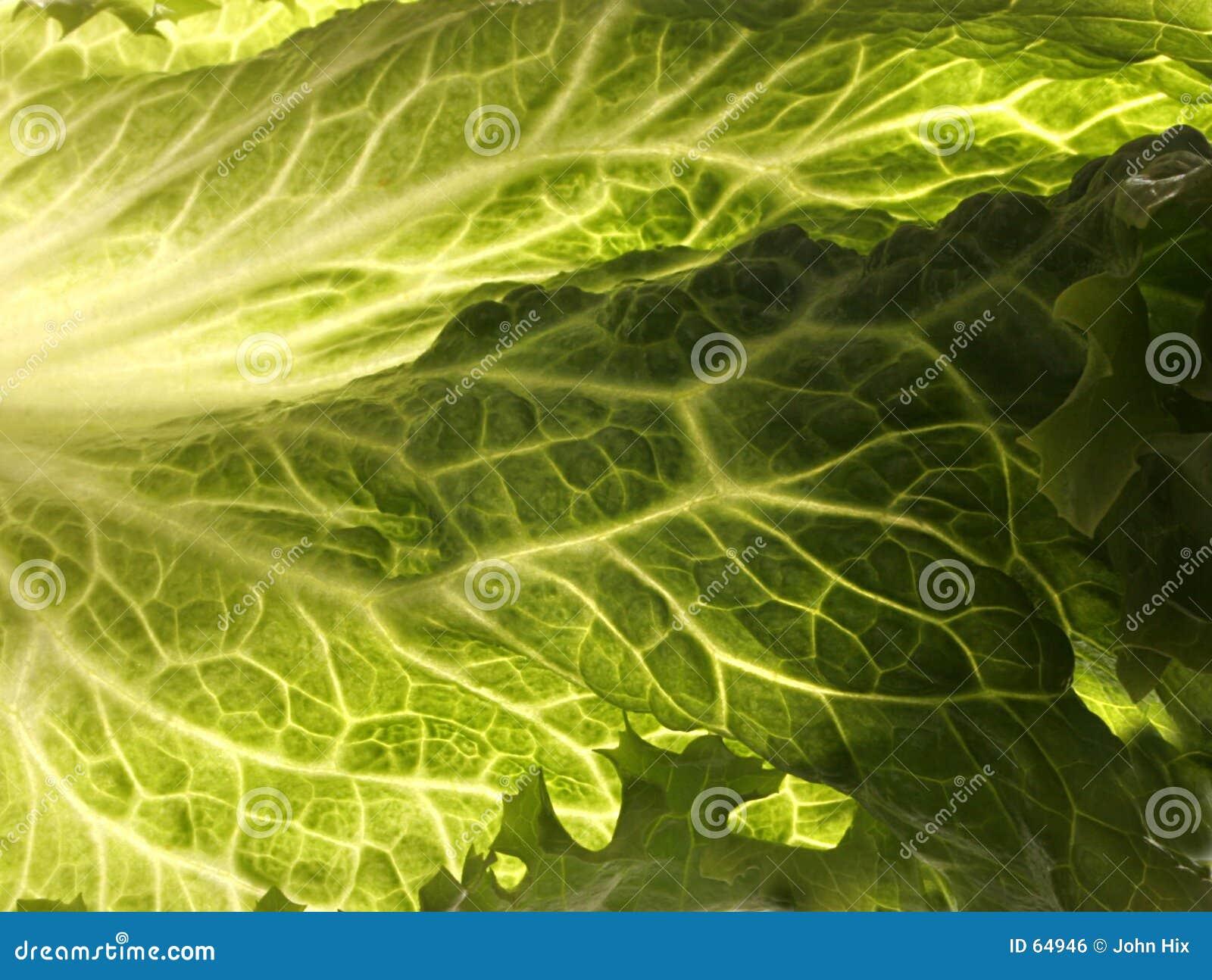 Download Lame photo stock. Image du sain, éclairage, légumes, mémoire - 64946