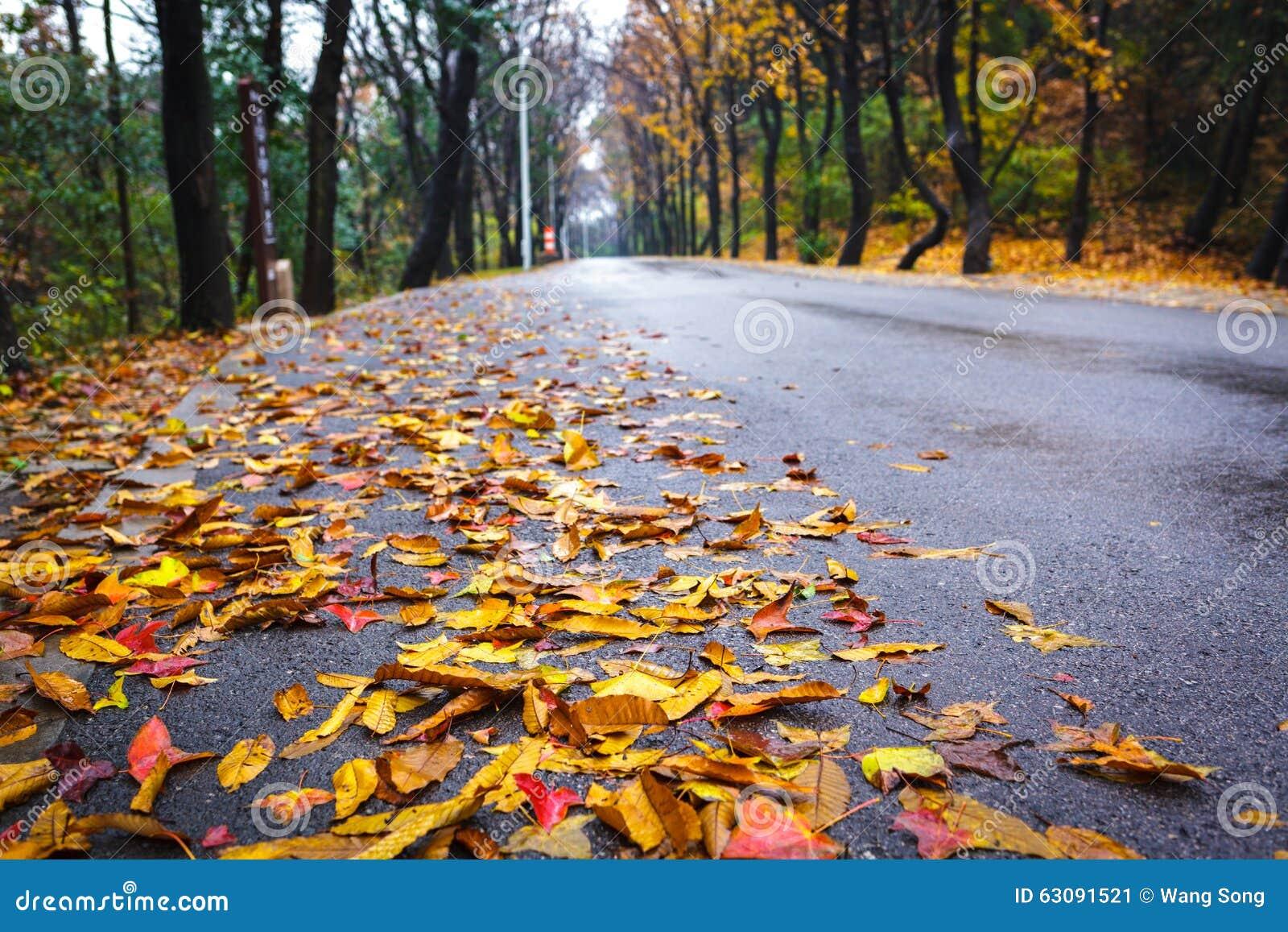 Download Lame D'érable Sur L'asphalte Image stock - Image du asphalte, marche: 63091521