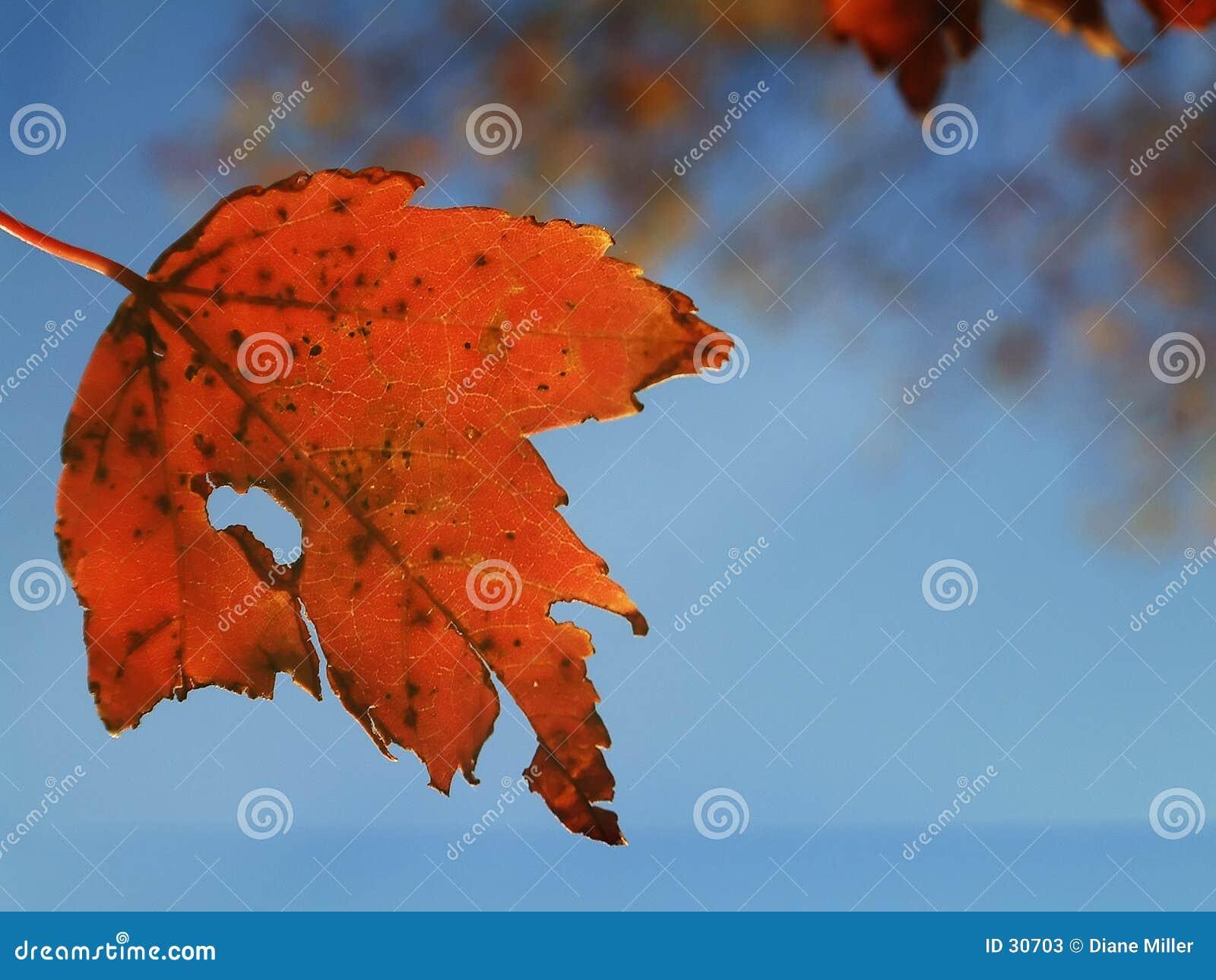 Lame d automne