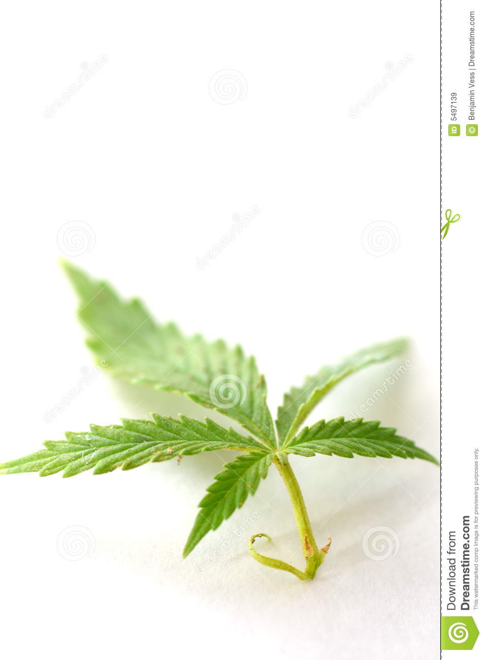 Lame de cannabis