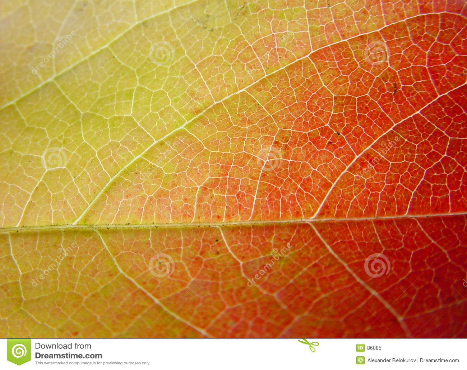 Lame de fond en le vert, le jaune et le rouge