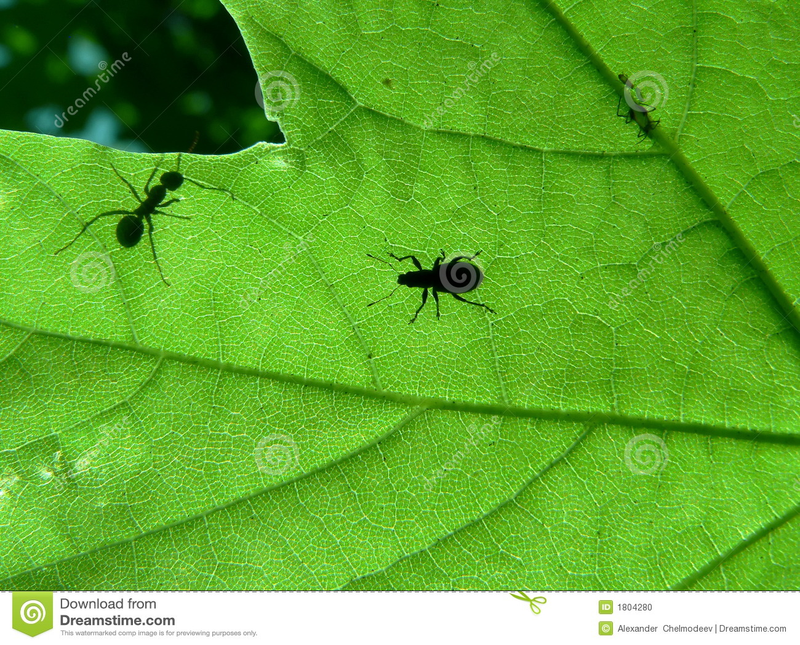 Lame et fourmi