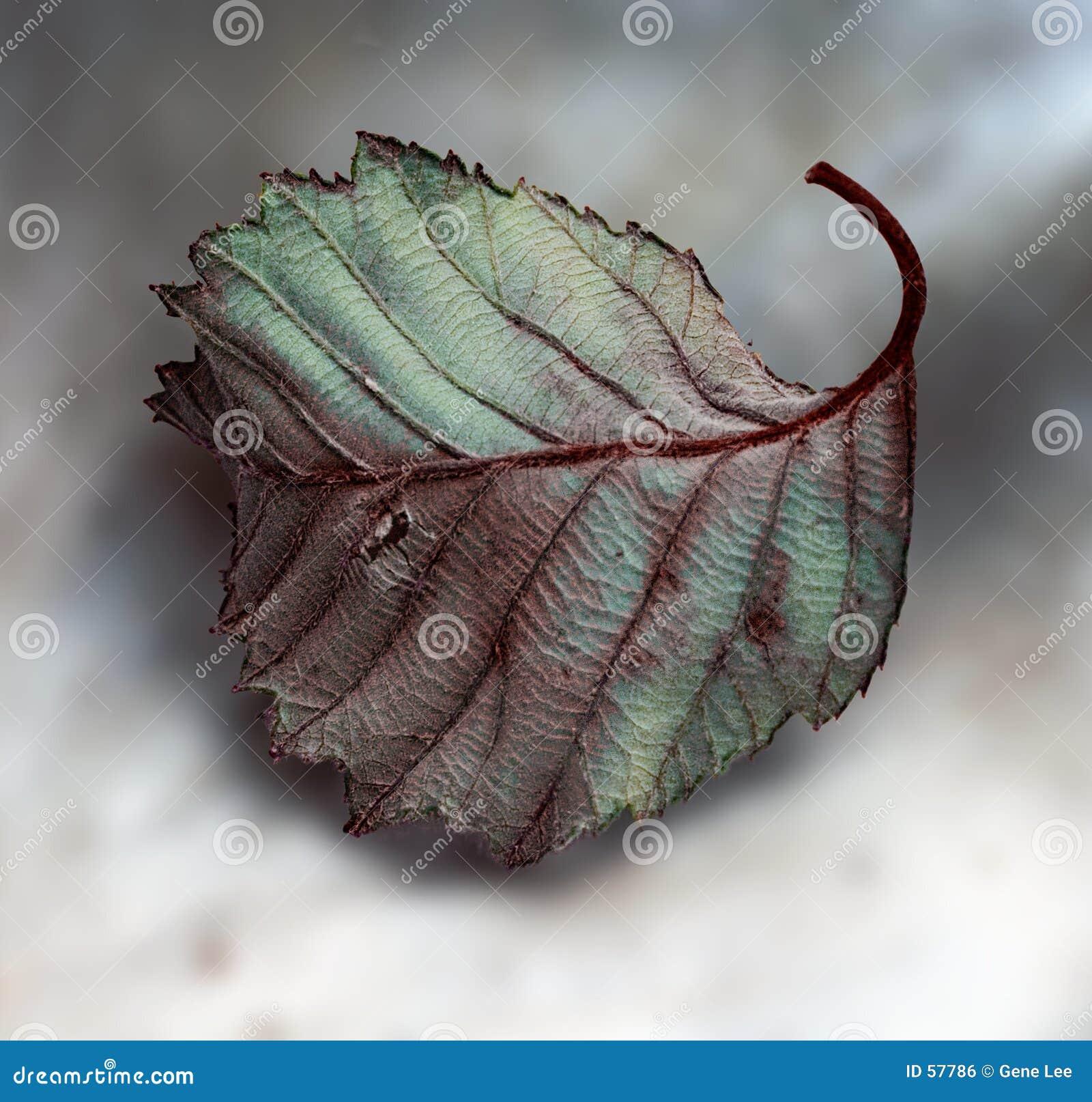 Download Lame tombée photo stock. Image du automne, texture, ombres - 57786