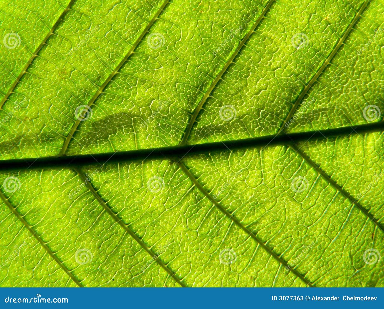 Lame vert clair