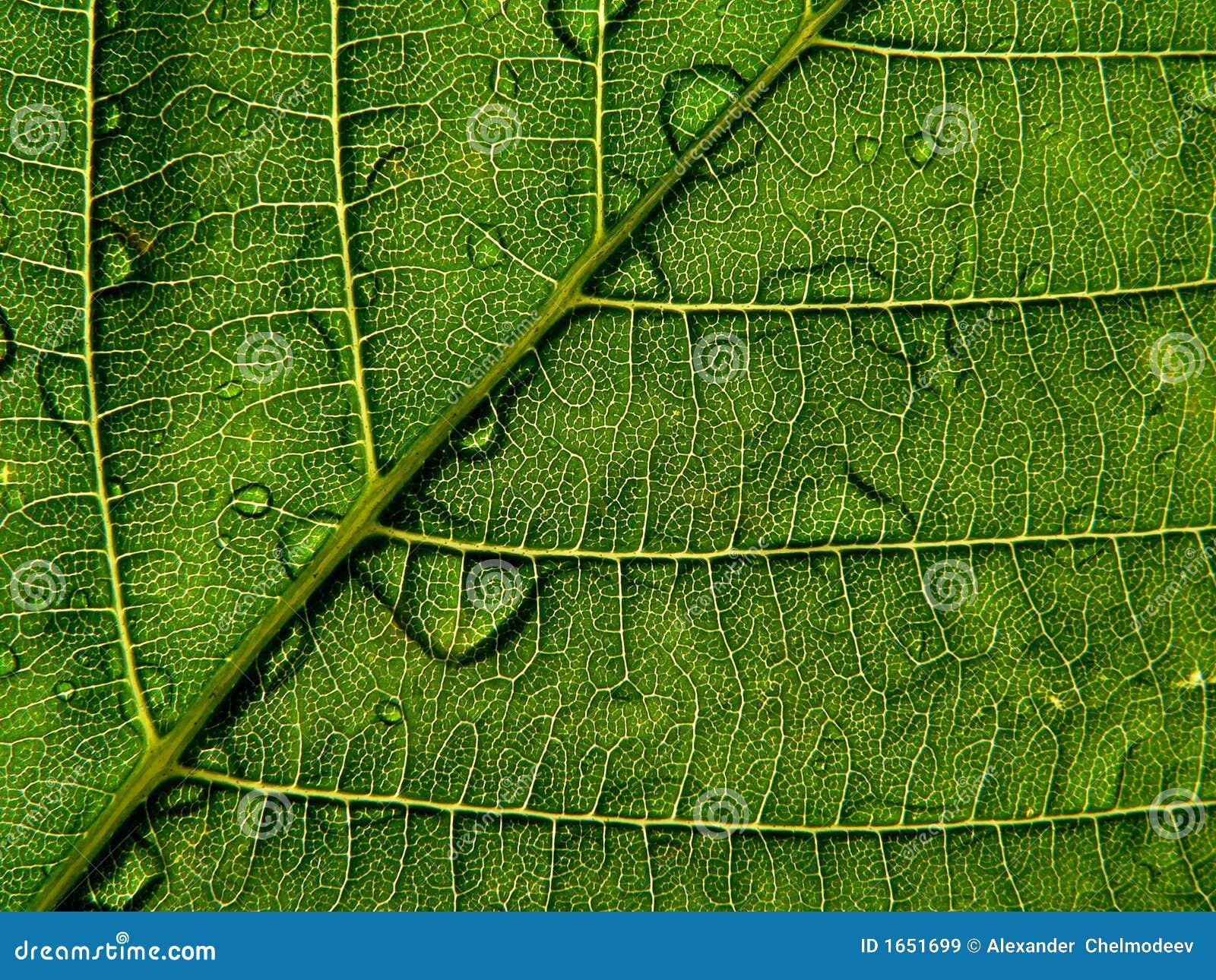 Lame verte avec la baisse