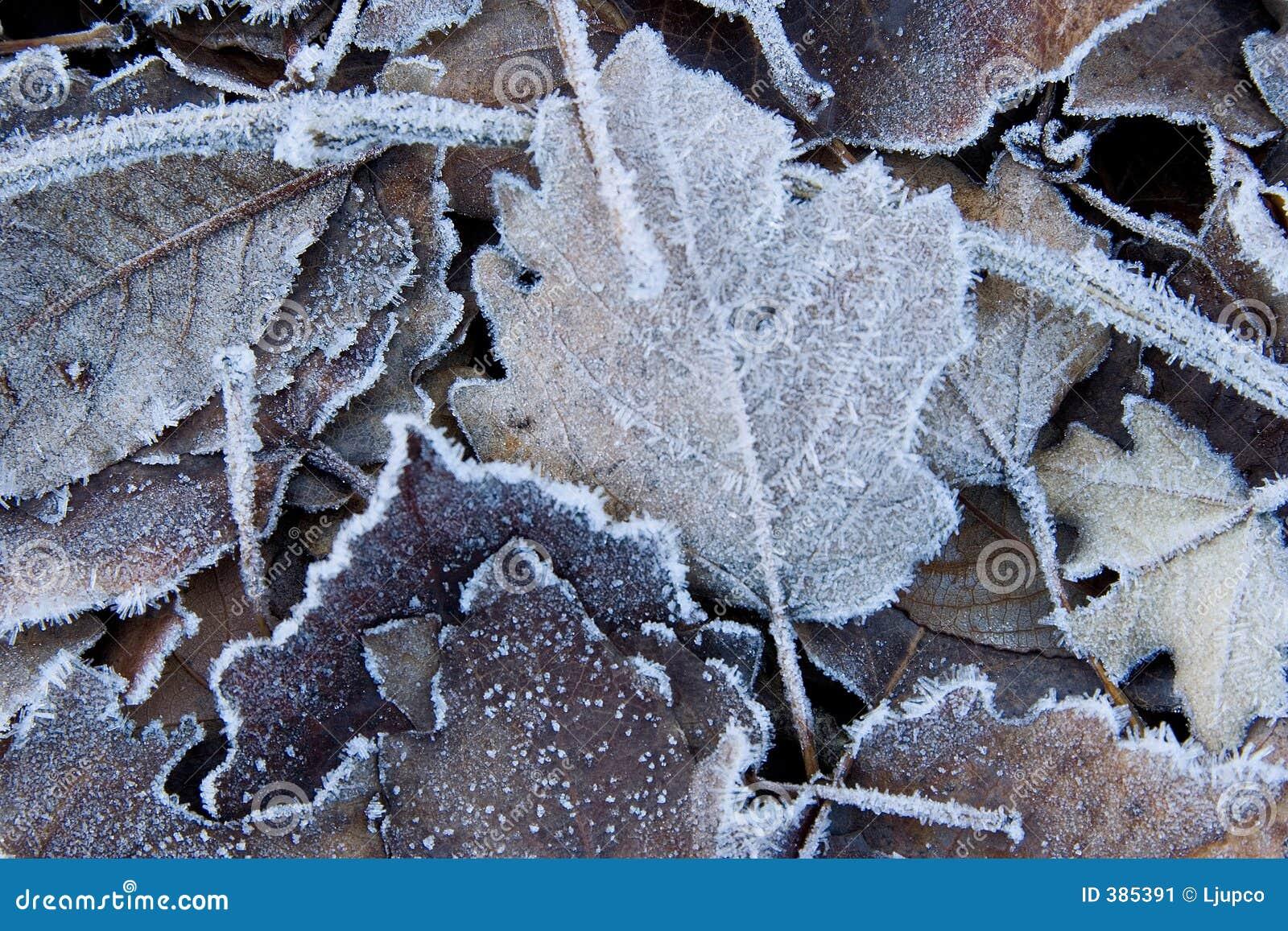 Lames couvertes dans le gel