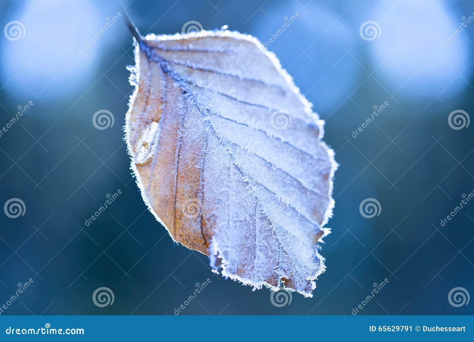 Lames couvertes de gelée