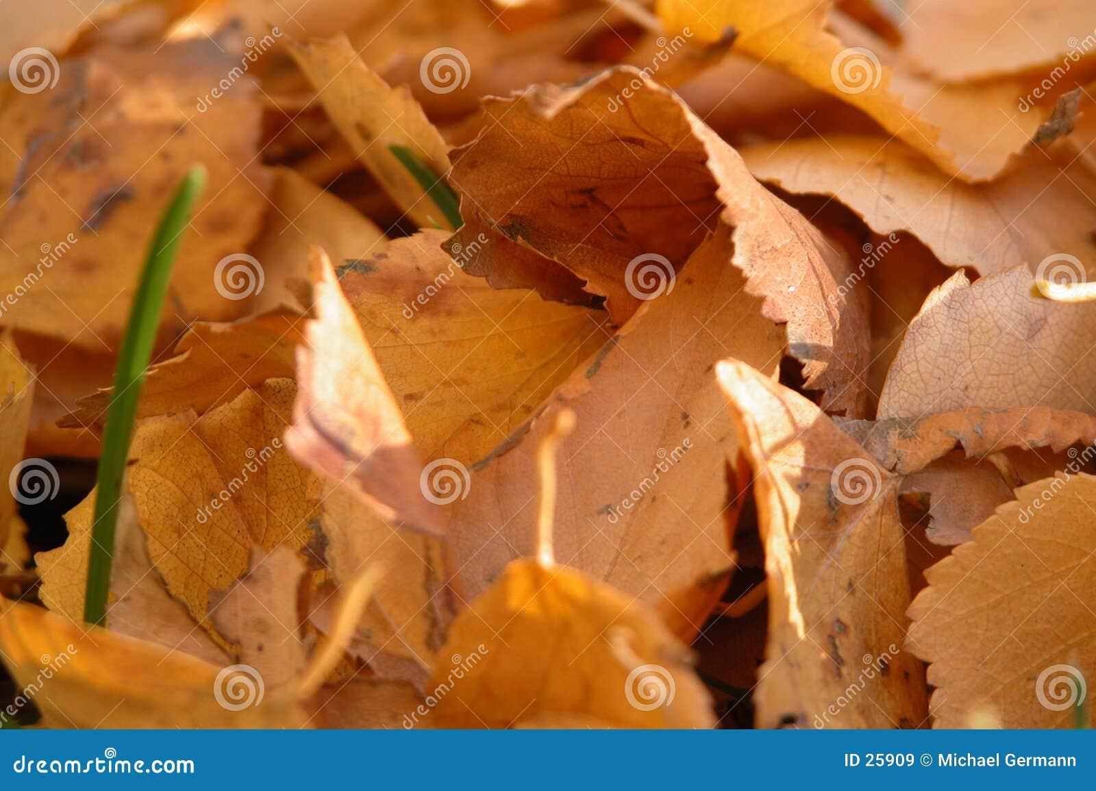 Lames d automne