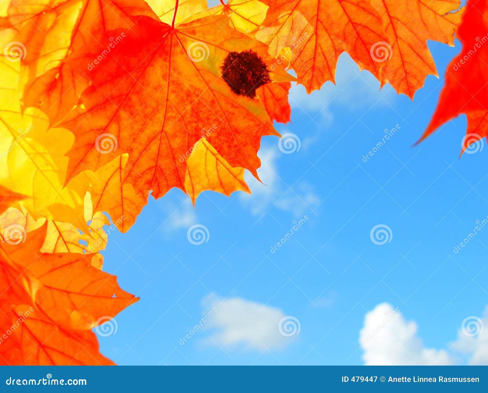 Lames d automne colorées
