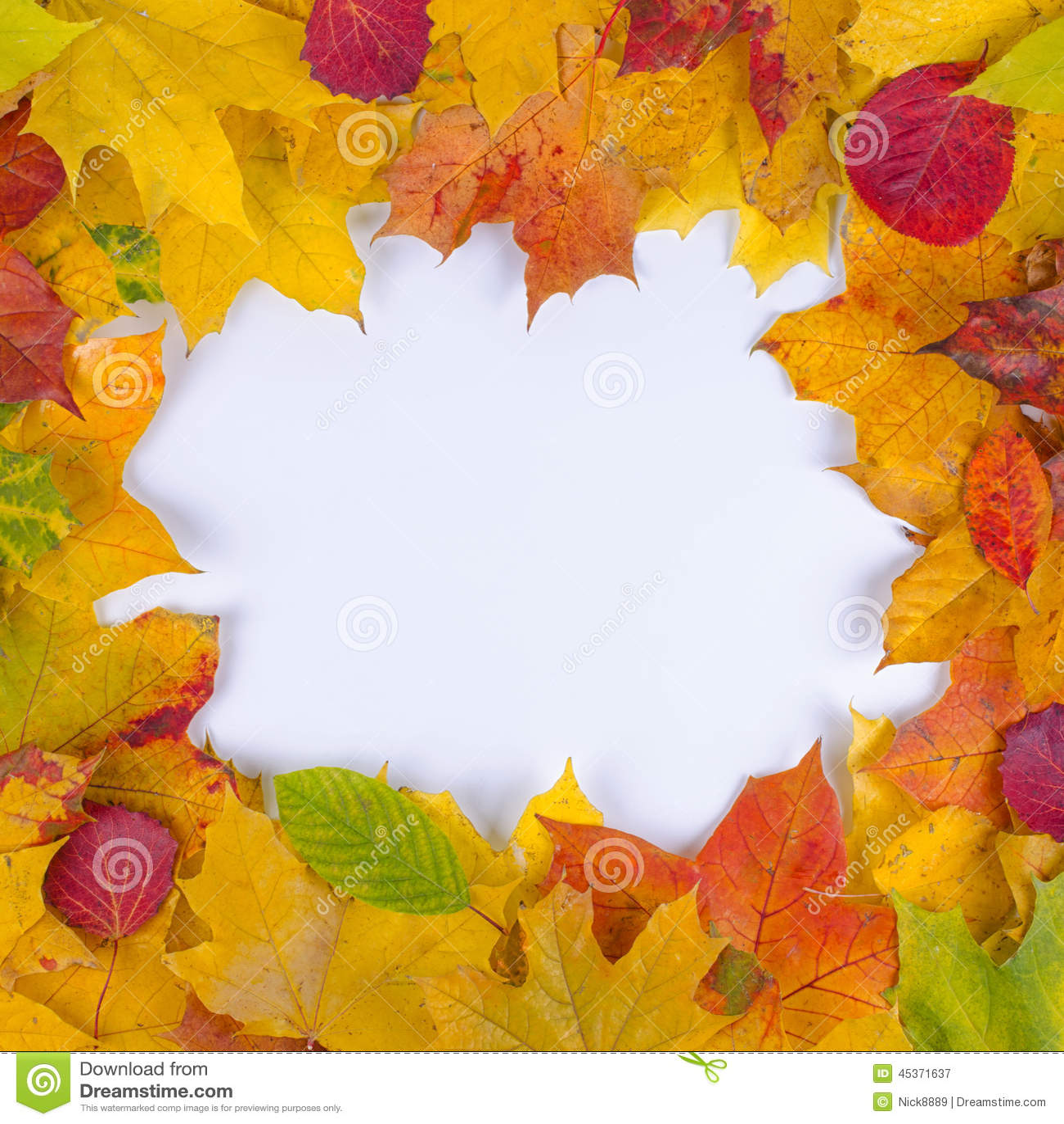 Lames d automne tombées