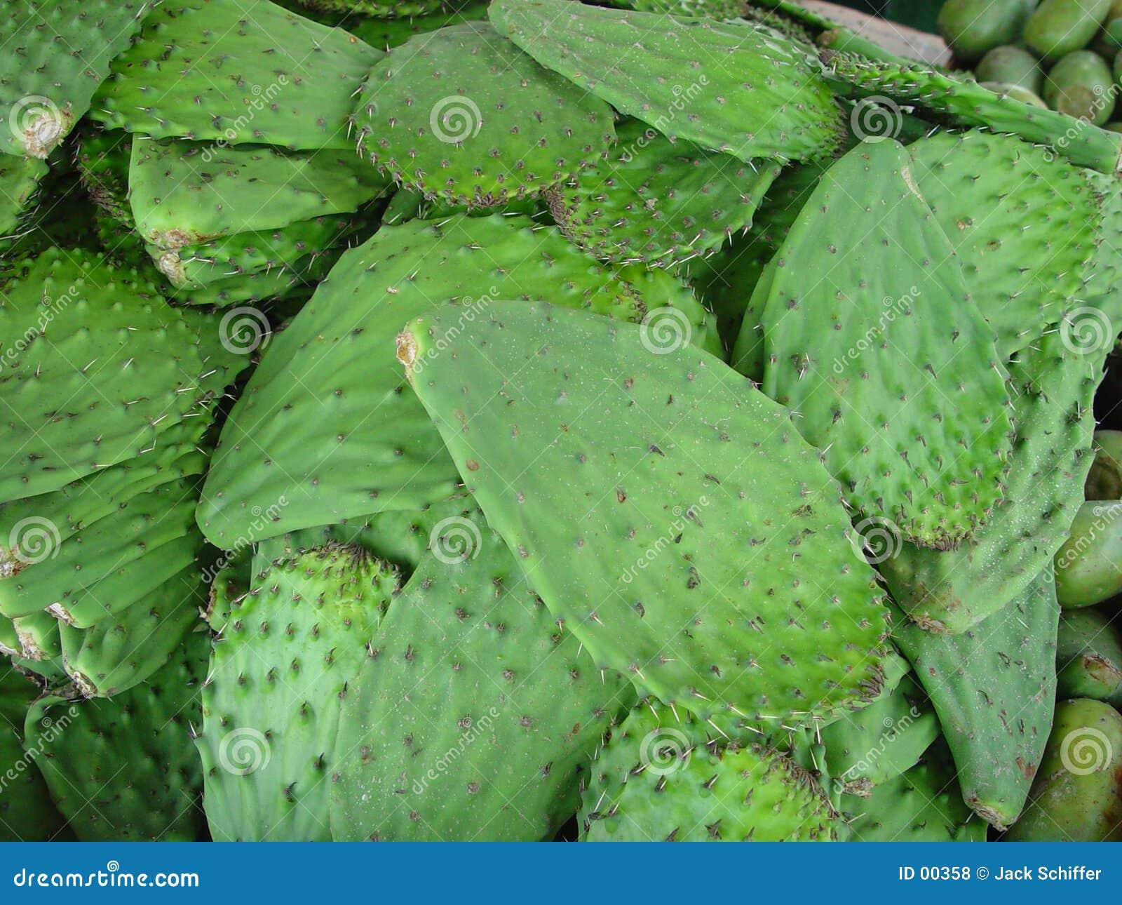 Lames de cactus
