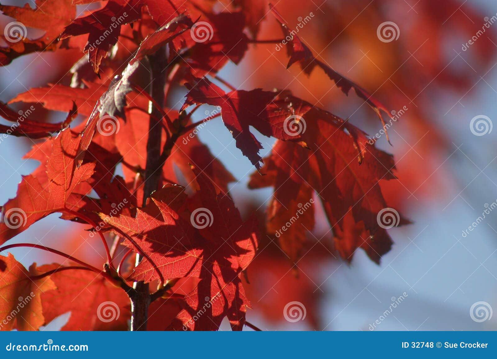Lames de rouge d octobre