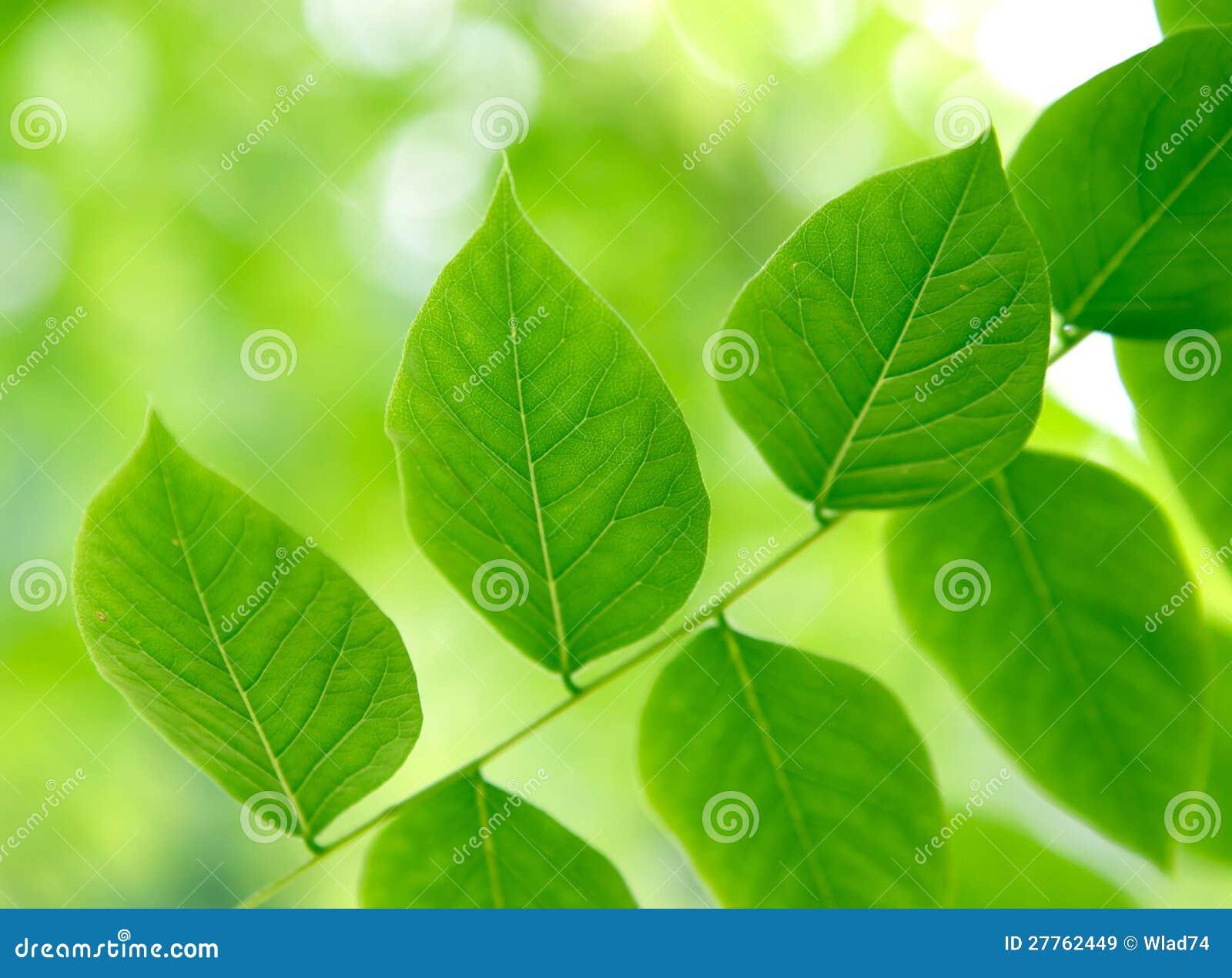 Lames de vert dans la forêt