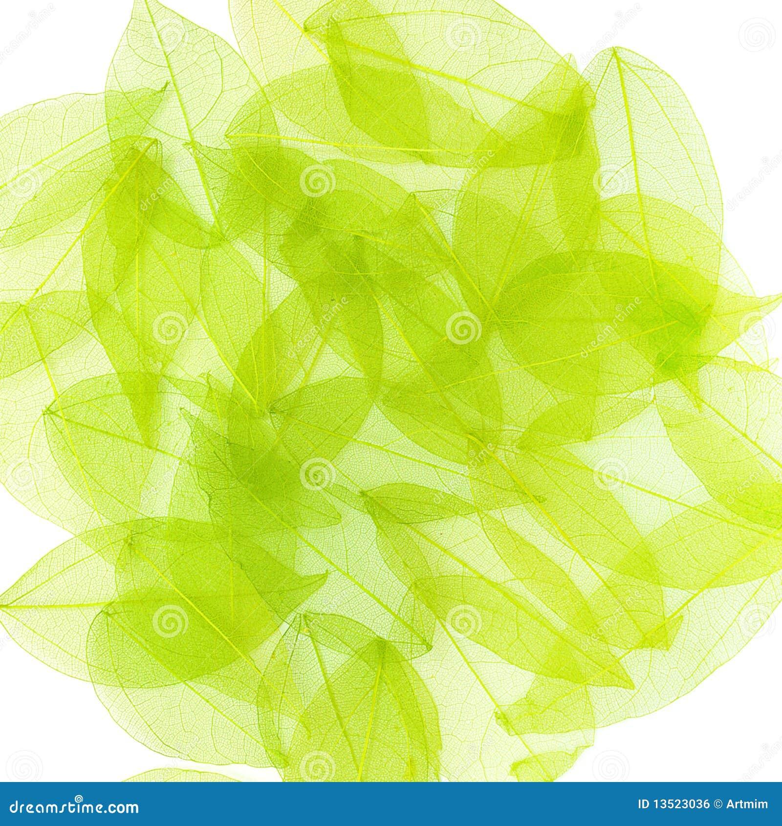 Lames de vert sur le blanc. Fond de source