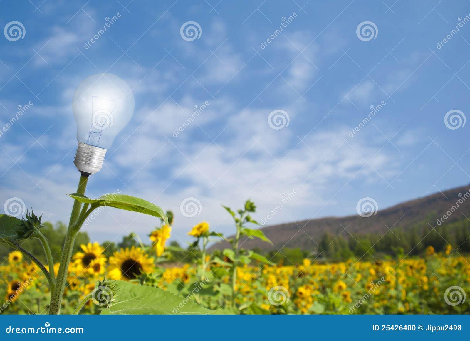 Lamp bulb sunflower on sunflower field
