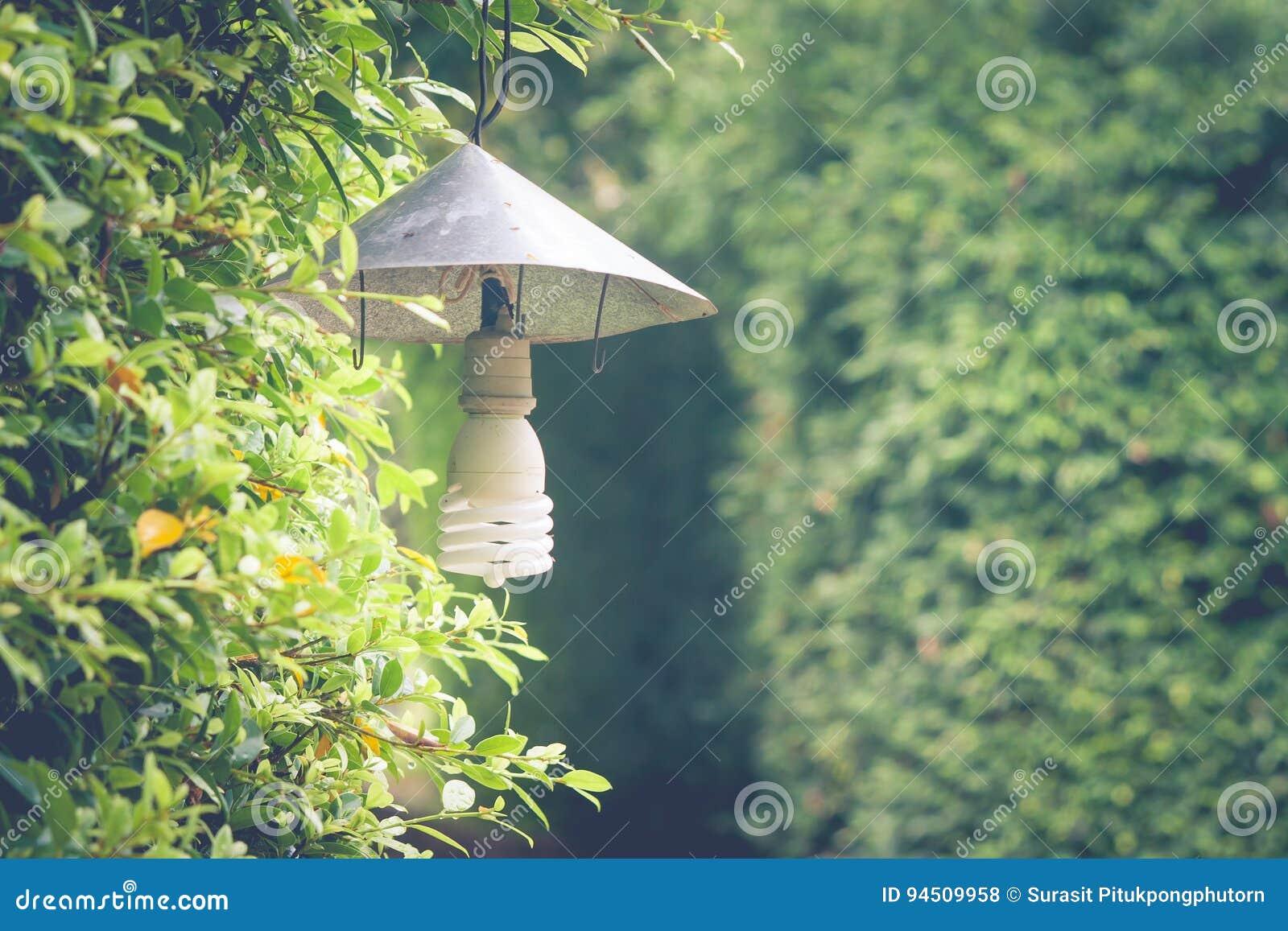 Lampade A Sospensione Allaperto : Lampada d annata che appende sugli alberi verdi al giardino all