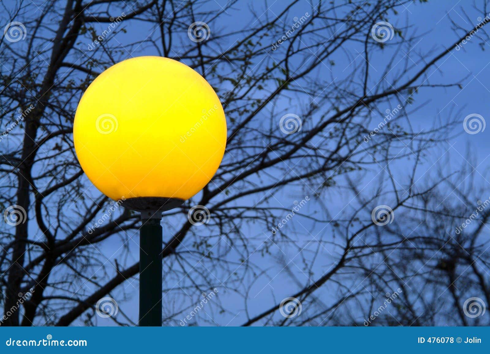 Lampe et arbre