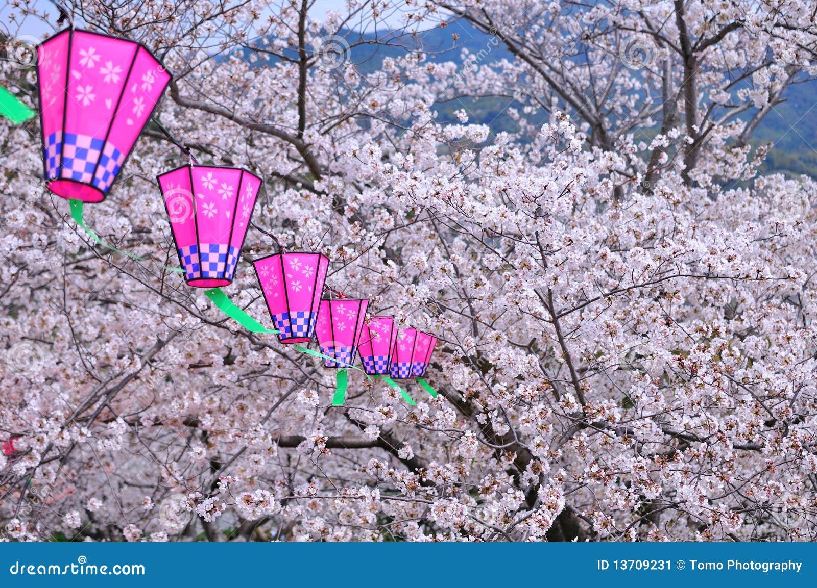 lampion japonais et fleur de sakura image stock image 13709231. Black Bedroom Furniture Sets. Home Design Ideas