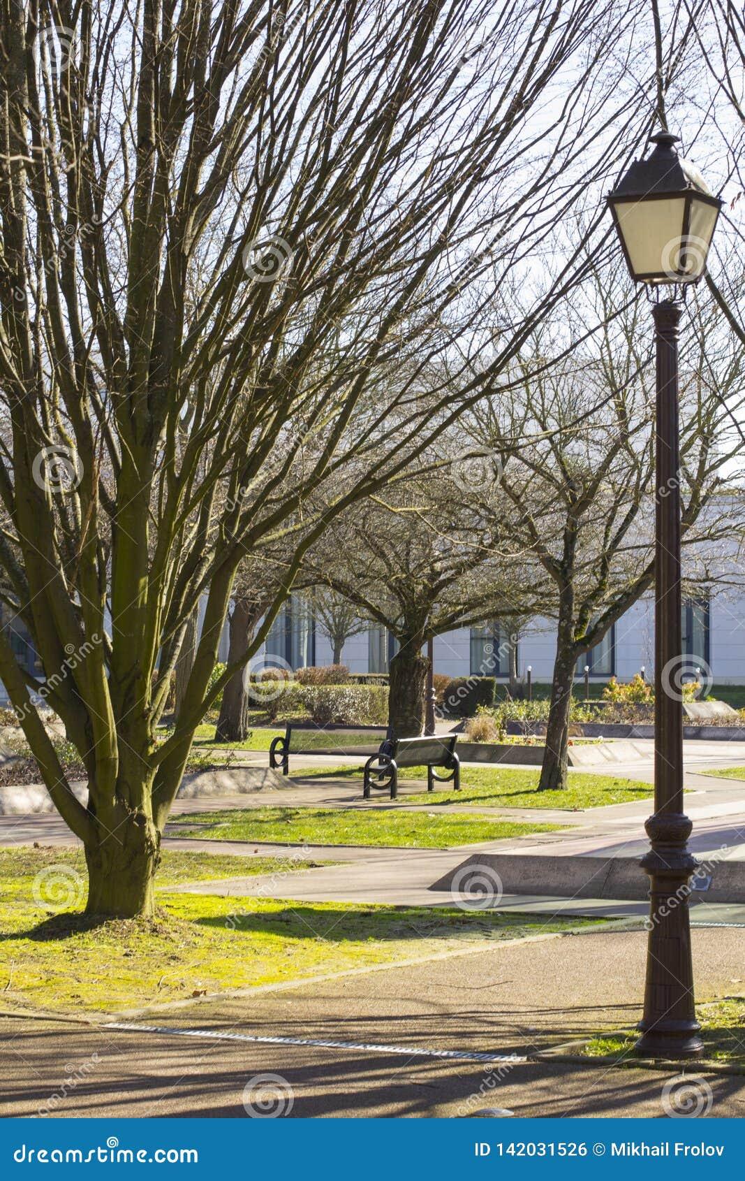 Lamppost z żelaznym żelazo lampionem w retro stylu w tle jest wczesnym wiosny parkiem z drzewami i ławkami