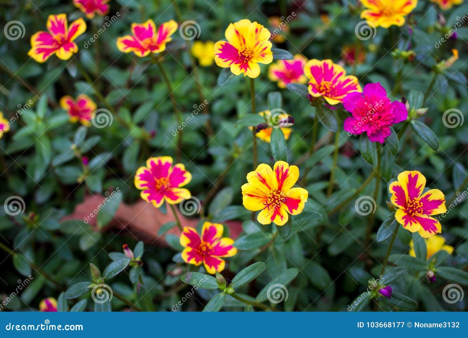 Unknown beautiful flower in garden stock image image of buttercup unknown beautiful flower in garden izmirmasajfo
