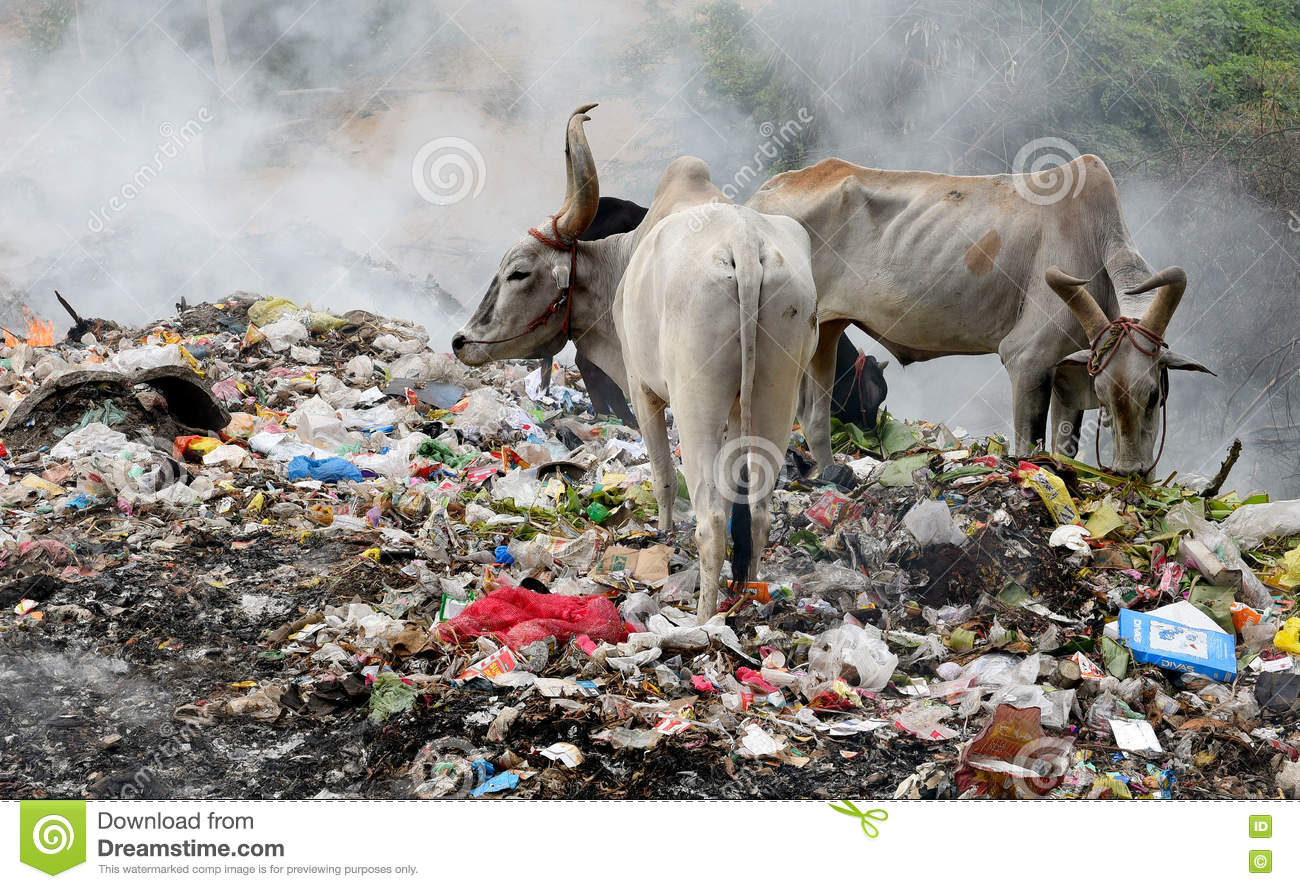 effects of pollution There are health problems related to land pollution there is also economic and soil problems lets find out how harmful the environment can be when we pollute our lands and soils.