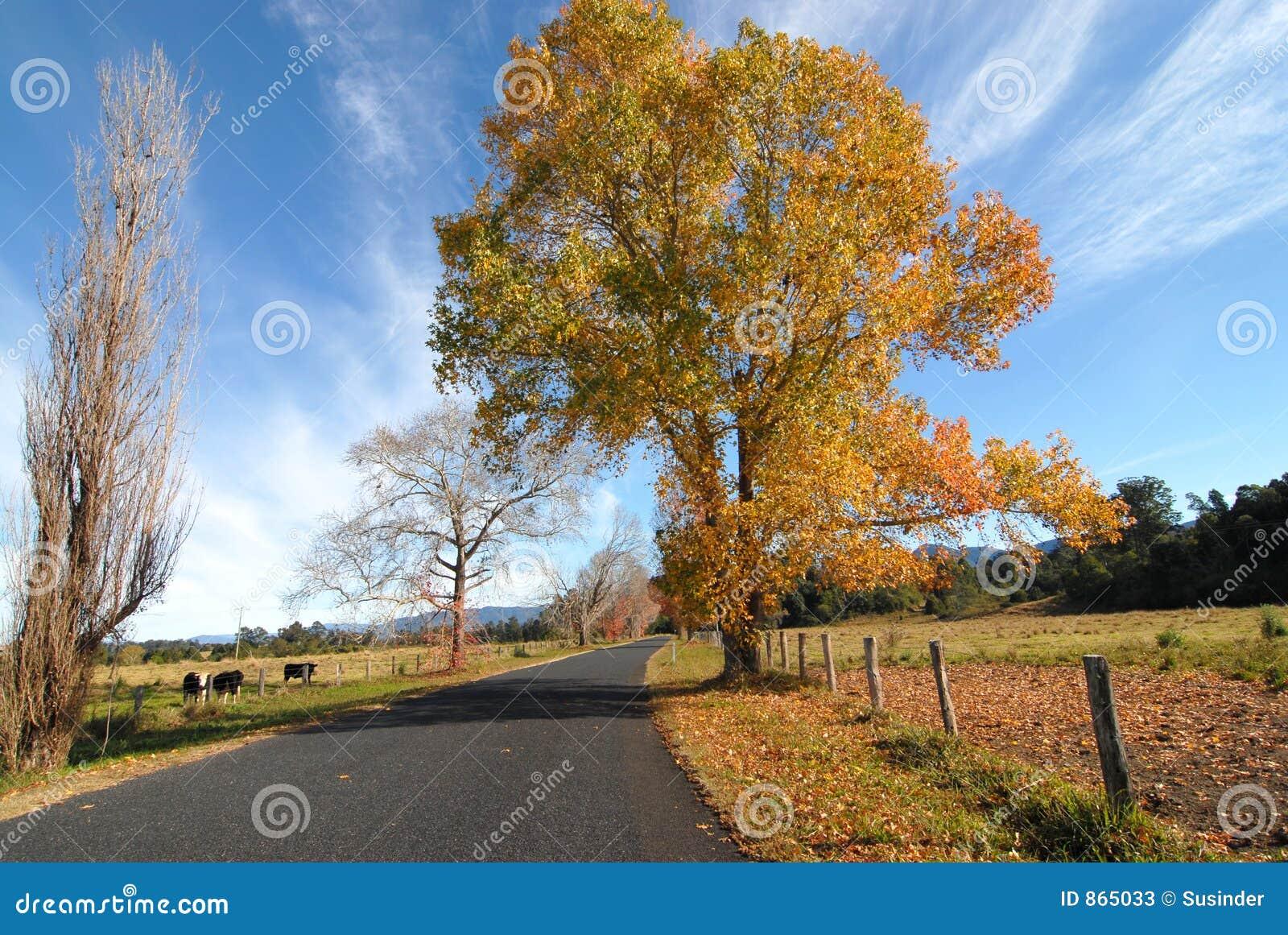 Land-Straße im Herbst