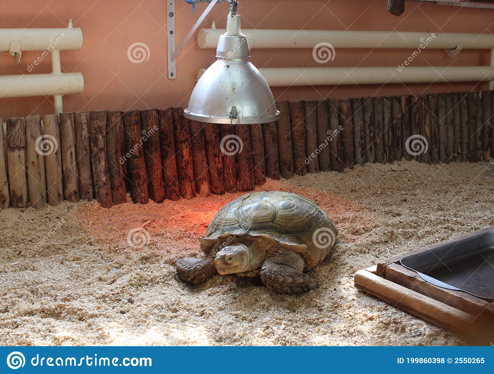 Land Turtle In A Terrarium Basks Under A Lamp Stock Photo Image Of Black Texture 199860398