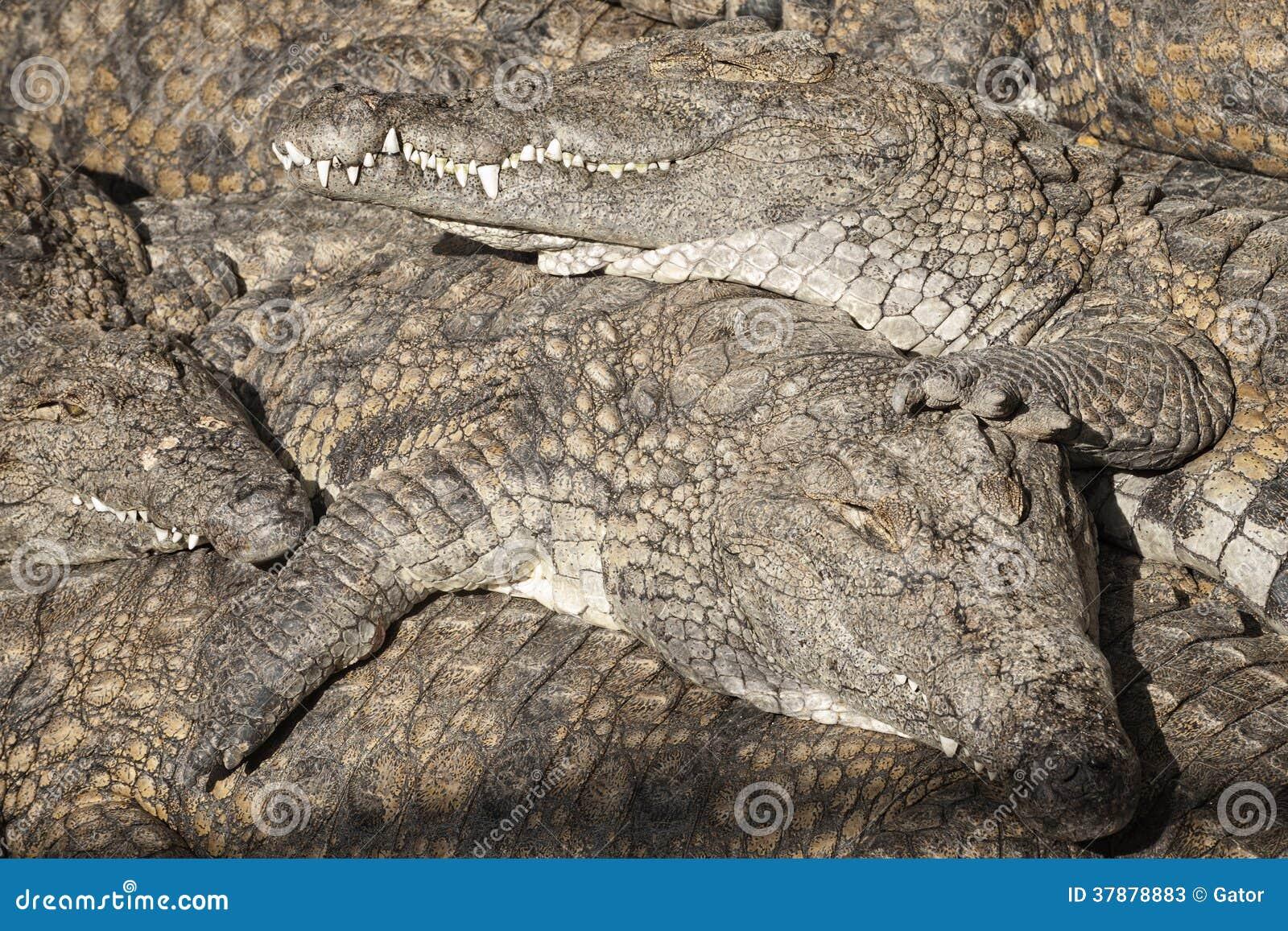 Land van crocs