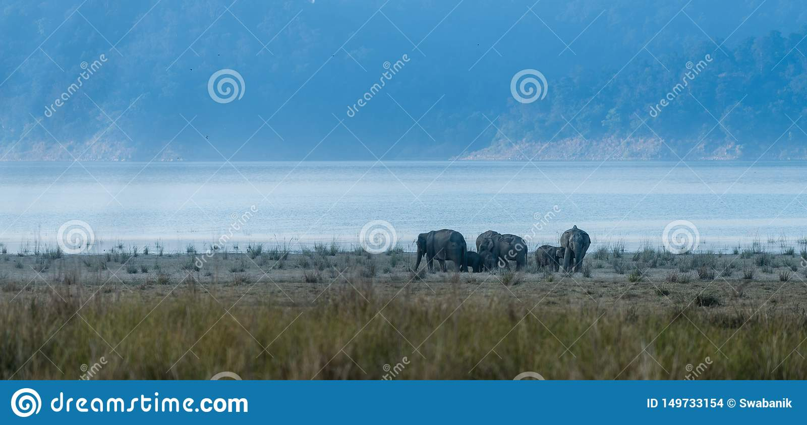 Land of Elephants at Jim Corbett