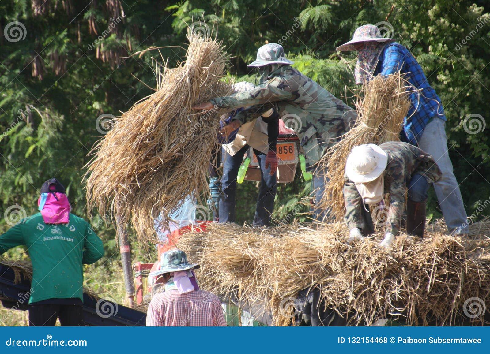 Landarbeit und Agrarprodukt