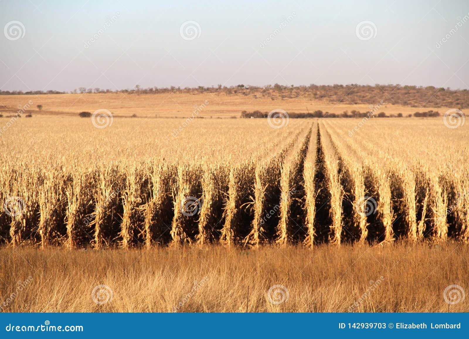 Landbouwbedrijf in Potchefstroom, Zuid-Afrika