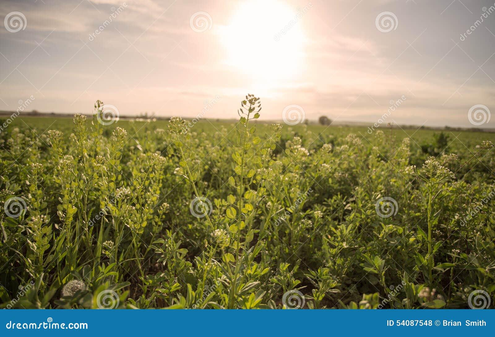Landbouwbedrijfgebied