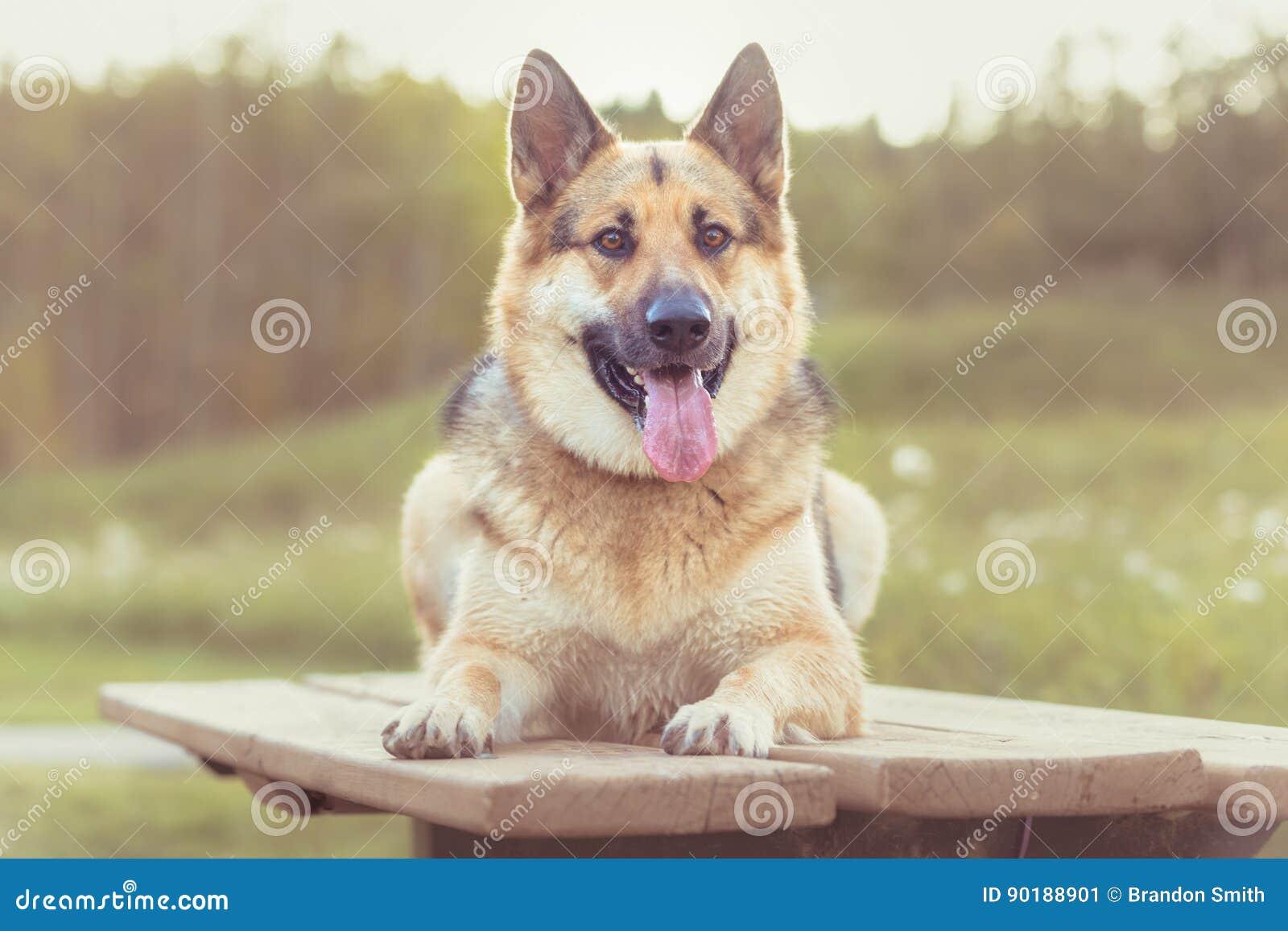 Landbouwbedrijfhond