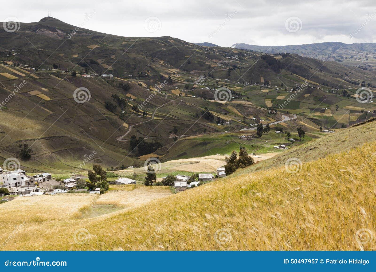 Landbouwbedrijven en gewassen dichtbij Zumbahua