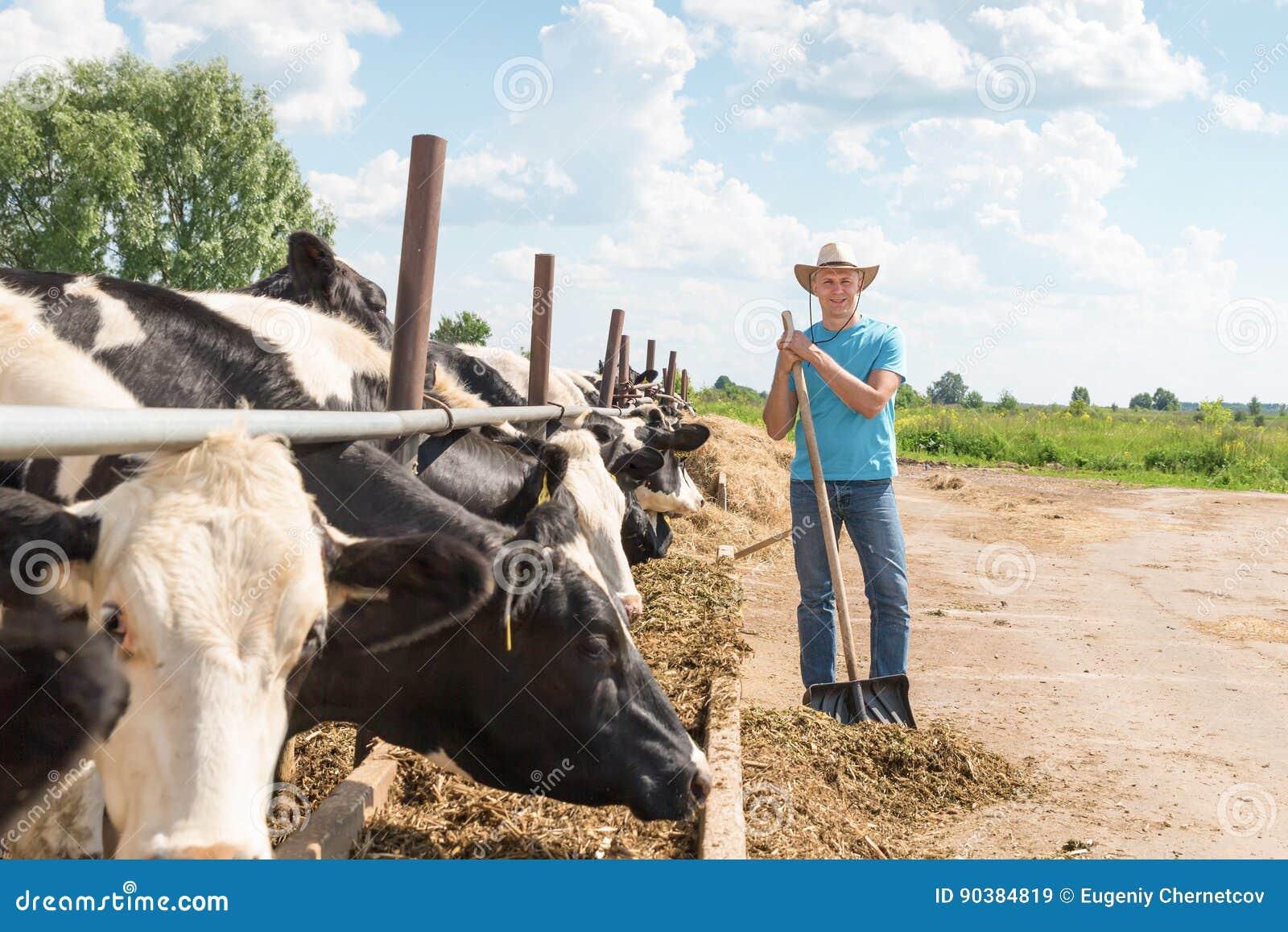 Landbouwer die aan landbouwbedrijf met melkkoeien werken