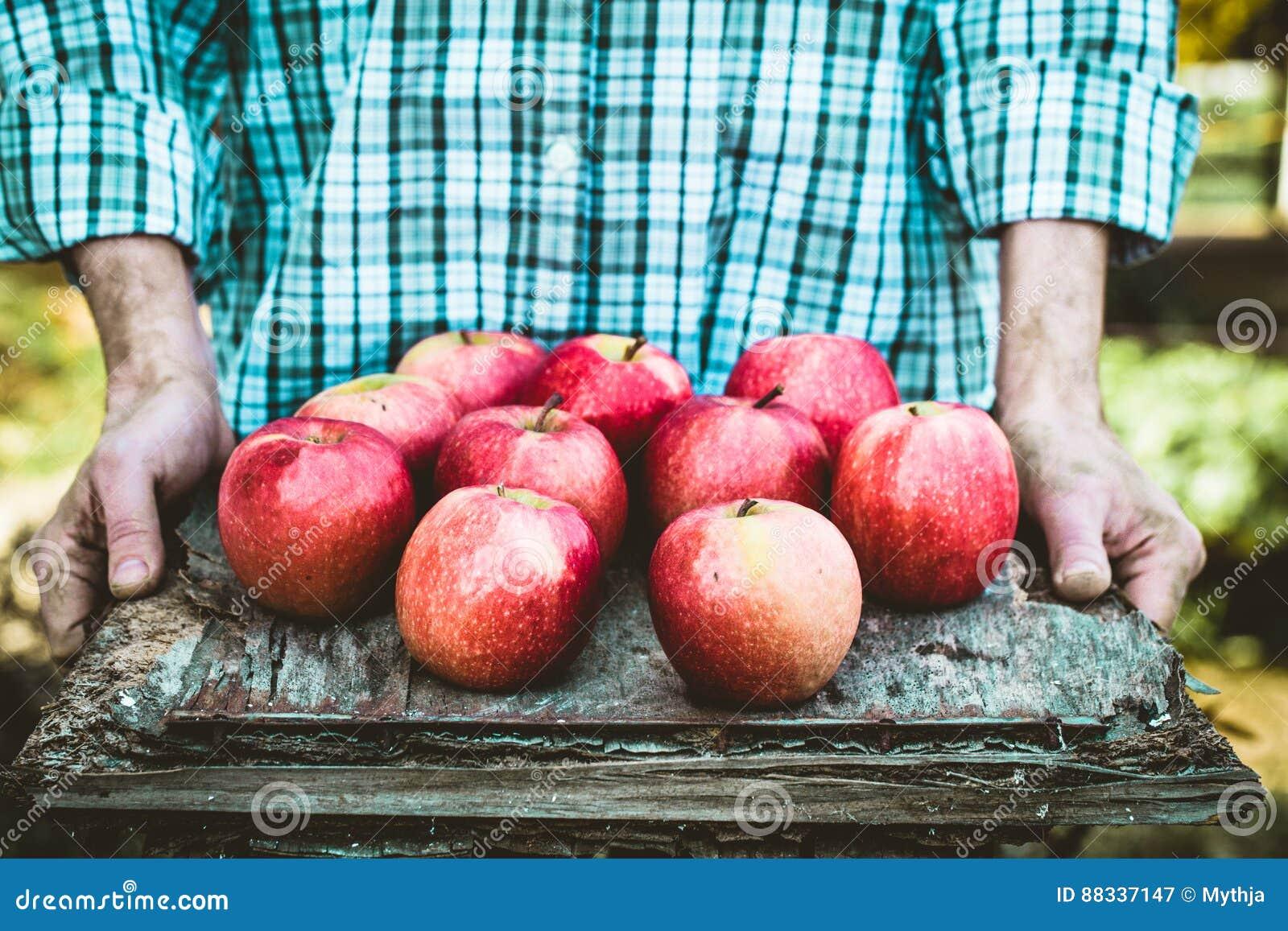 Landbouwer met appelen