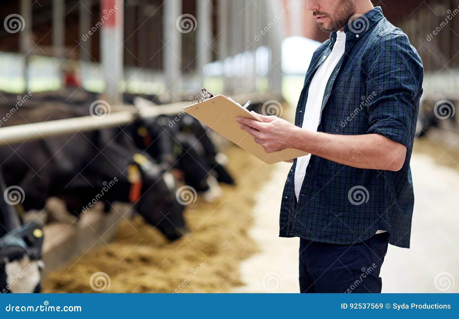 Landbouwer met klembord en koeien in koeiestal op landbouwbedrijf